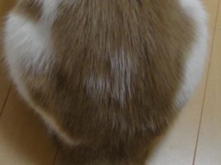 2011-0220-02.jpg