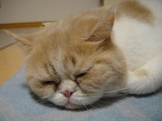 ぶさかわな寝顔.jpg