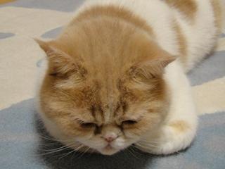 ぶさかわな寝顔2.jpg