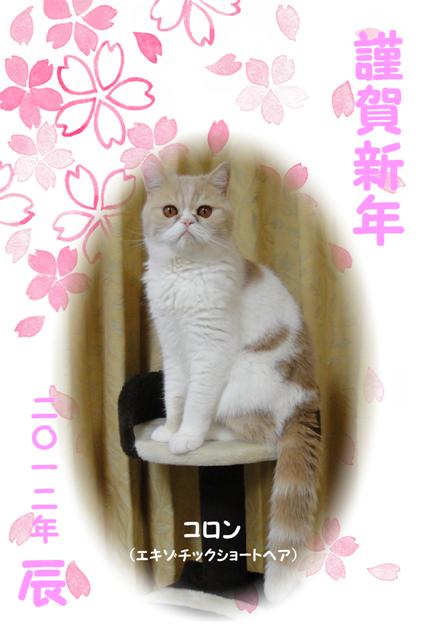 2012年賀状(辰)Web.png