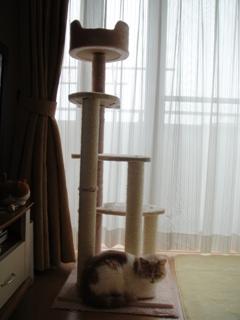 新おさかなタワー.jpg