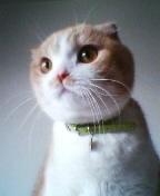 子猫マロン1.JPG