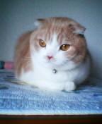 子猫マロン2.JPG